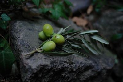 6 Good Reasons to Include Olives in Your Diet